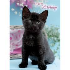 birthday card little black kitten