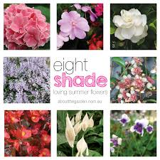Summer Flowers For Garden - 8 summer flowers for shady gardens about the garden magazine