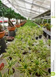 greenhouse for the cultivation of ornamental plants and bonsai