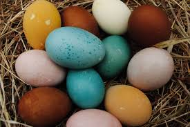 Backyard Laying Chickens by Chicken Breeds That Lay Colored Eggs With Backyard Can In Many Fun
