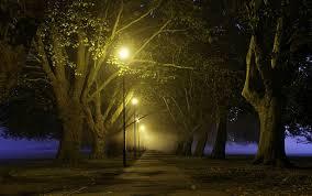 photography nature landscape lantern trees path lights park
