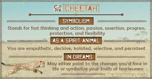 cheetah meaning and symbolism the astrology web
