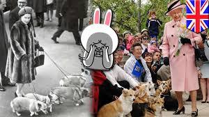 queen s dogs cute corgis are queen elizabeth u0027s favorite pet dogs in danger of