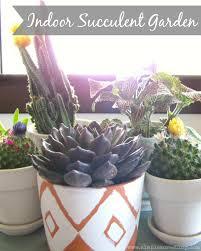 indoor succulent garden diy simple acres blog