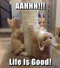 Life Is Good Meme - aahhh life is good lolcats lol cat memes funny cats