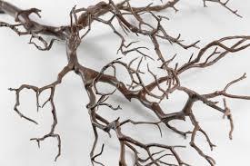 manzanita trees manzanita tree branches brown 38 5in