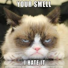 Mean Kitty Meme - 900 best grumpy cat images on pinterest grumpy cat grumpy cat