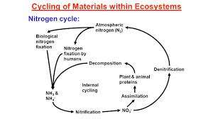 Nitrogen And Carbon Cycle Unit 4 U2013 Nutrient Cycles In Marine