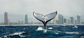 picture perfect 6 of the best views on the gold coast wheretraveler
