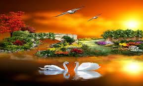 sunset romance beautiful cute flowers yards pretty birds swans