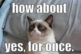 How About Yes Meme - grumpy cat memes quickmeme