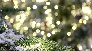 christmas background tree branch snow lights bokeh stock video