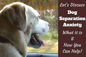 dog barks when we leave dog separation anxiety dealing with it and what you need to know