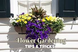 flower gardening tips and tricks mother2motherblog