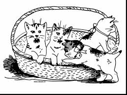 free coloring pages of kittens u2013 kitten