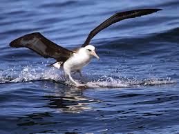 Oregon wildlife tours images Oregon pelagic tours november 2014 jpg