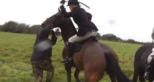 California Flag Horse Shocking Moment Huntswoman Repeatedly Whips Saboteur With A Riding