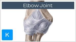 Back Knee Anatomy Elbow Joint Human Anatomy Kenhub Youtube