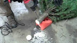 how to keep a christmas tree alive forever well at least until