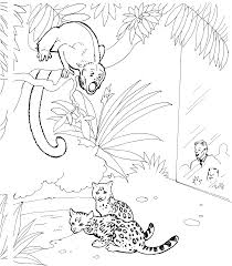 gecko coloring page cartoon monkey coloring pages monkey