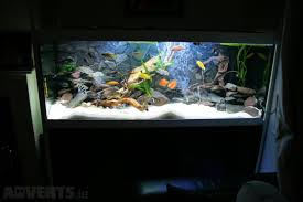 fish tank aquarium custom made pet animal services service
