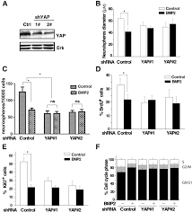 Yap Flag Bmp2 Smad Signaling Represses The Proliferation Of Embryonic