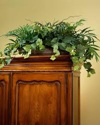 Home Decoration Plants by 99 Ideas Decorative Plants For Office On Vouum Com
