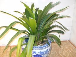 easy houseplants henry homeyer