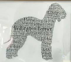 grooming a bedlington terrier puppy 68 best bedlington terrier images on pinterest terriers terrier