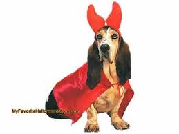Halloween Costumes Large Dogs Halloween Costume Ideas Big Dogs