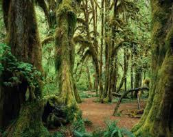 forest backdrop forest backdrop etsy