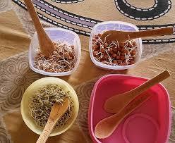 edible spoon edible spoons edible spoons exporter manufacturer supplier