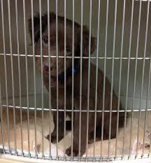 crate training veterinary medical associates veterinary medical associates blog