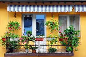 pflanzen fã r den balkon pflanzen fr balkon mit viel sonne diese kruter eignen sich als