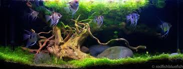 Live Plants In Community Aquariums by Step By Step Guide For Setting Up A Planted Tank Ratemyfishtank Com