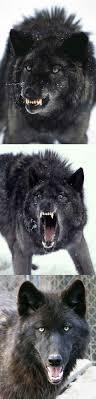 Insanity Wolf Meme Generator - bad pun insanity wolf meme generator imgflip