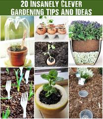 20 insanely clever gardening tips and ideas shtf prepping