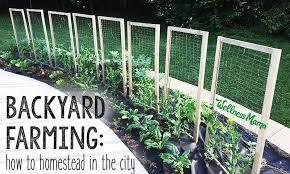 City Backyard Backyard Farming How To Homestead In The City Wellness Mama