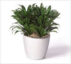 plant for office the ultimate guide to office plants