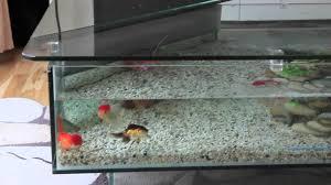 Aquarium Decorations Cheap The Amazing Aquarium Design Indoor And Outdoor Ideas Aquariums For