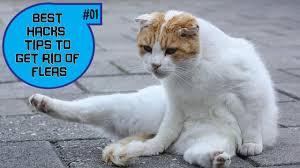 best flea treatment for cats part 1 youtube