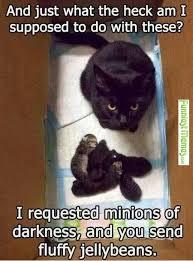 Cute Pet Memes - great communication skills funny memes memes and animal