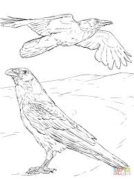 common raven coloring page free printable coloring pages