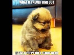 Cute Dog Memes - funny dog memes youtube