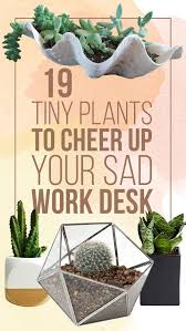 Best Plant For Office Desk 19 Tiny Plants To Cheer Up Your Sad Work Desk Cheer Desks And