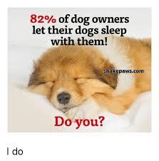 Orange Dog Meme - 82 of dog owners let their dogs sleep with them shakepawscom do