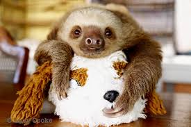 13 sloths that are actually you during thanksgiving