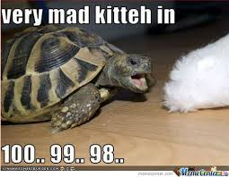 Mad Kitty Meme - verry mad kitty by rumbos meme center