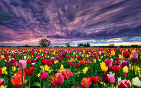 Flower Field Wallpaper - 30 vast field wallpapers backgrounds images design trends