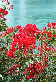 flowers miami flowers in miami entouriste